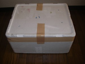 ライブロック 30cmキューブ水槽セット(形状お任せ)