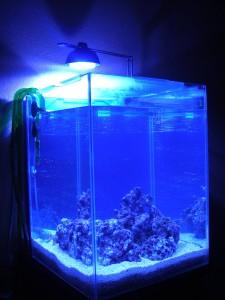 エーハイムLEDライトのみで照らした30cmキューブ水槽