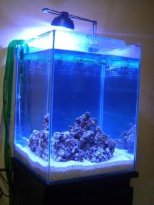 30cmキューブ海水魚水槽 立ち上げから1日経過