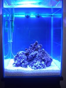 海水魚水槽 ガラス面に付着した白い物体
