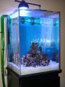 初めての水換えが終わった直後の30cmキューブHI海水魚水槽