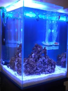 30cmキューブハイ 海水魚水槽
