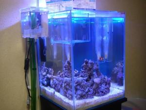 30cmキューブハイ海水魚水槽の全景