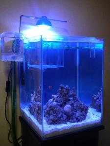 換水後の30cmキューブハイ海水魚水槽