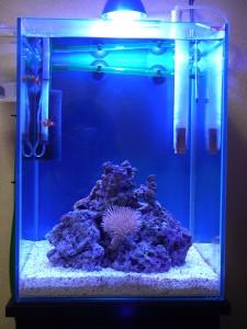 30cm海水魚水槽