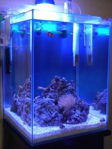 立ち上げ3カ月目の30cmキューブハイ海水魚水槽