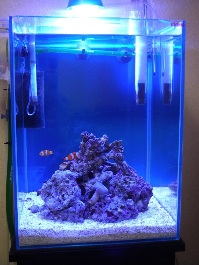 30cmキューブハイ海水魚水槽 ライブロックレイアウト変更前