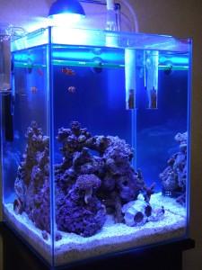 30cmキューブハイ海水魚水槽 ライブロックレイアウト変更後