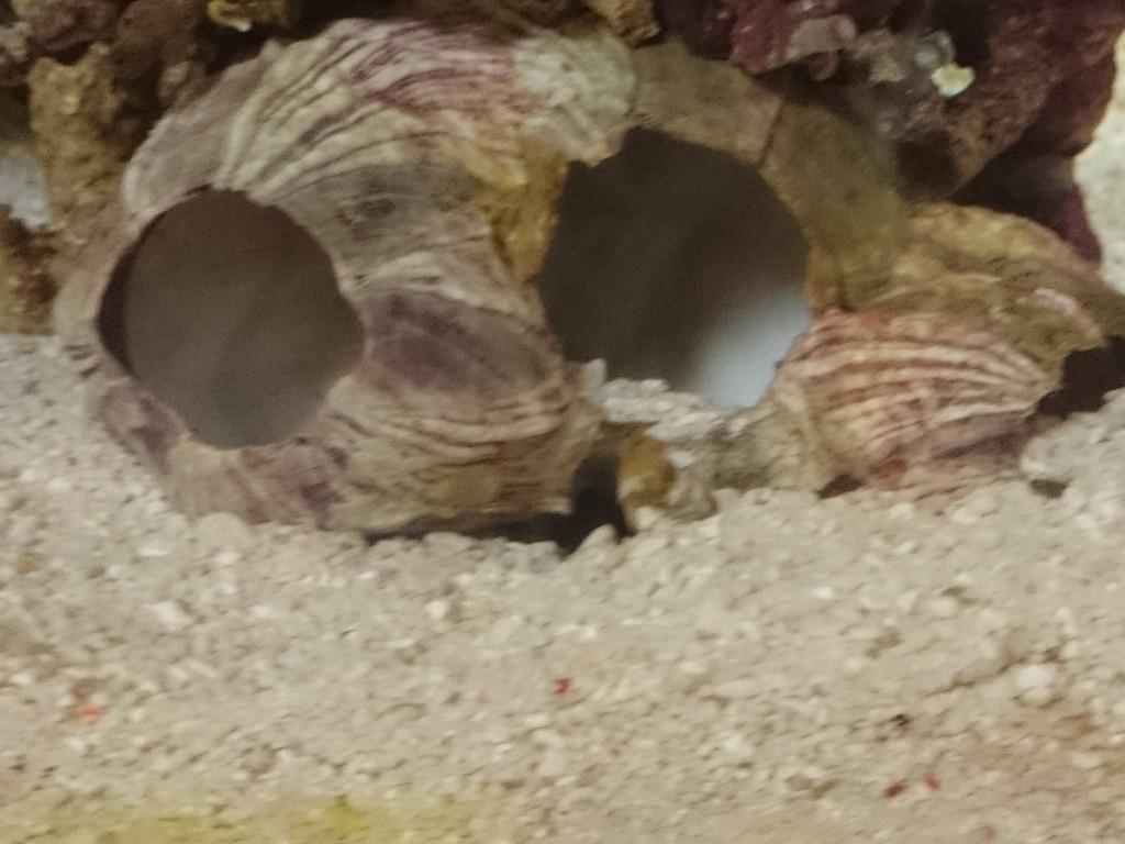 砂で埋められたカニハゼの巣穴
