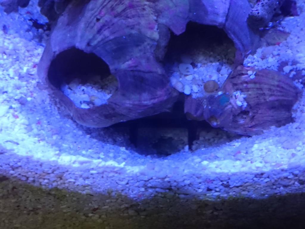 カニハゼの巣穴