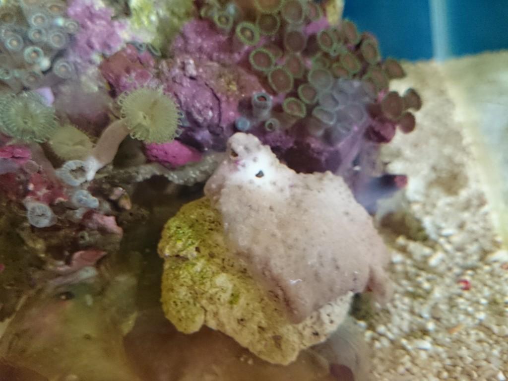 謎のアメーバ状生物によって穴が空いたスターポリプ