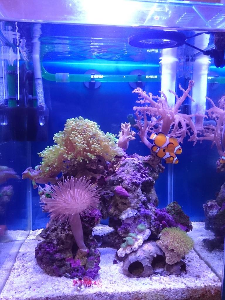 30cmキューブハイ海水魚水槽