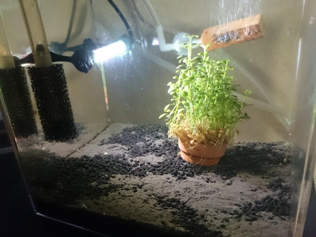 イトメ養殖・繁殖用水槽