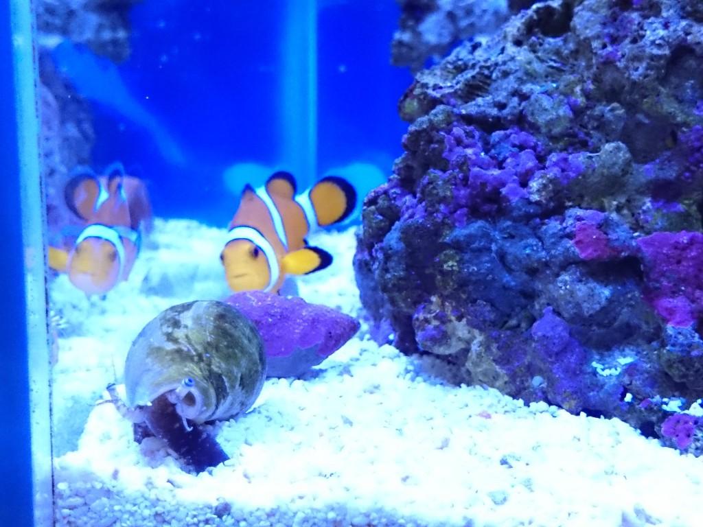正面から見たマガキ貝