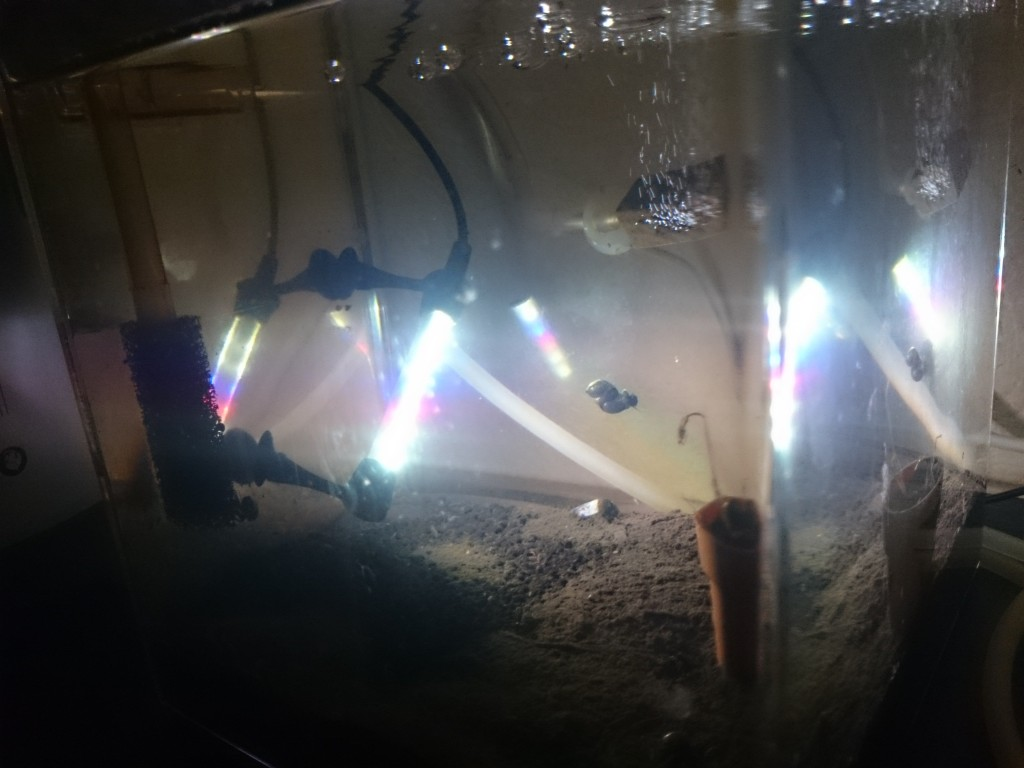 イトメ養殖、繁殖水槽