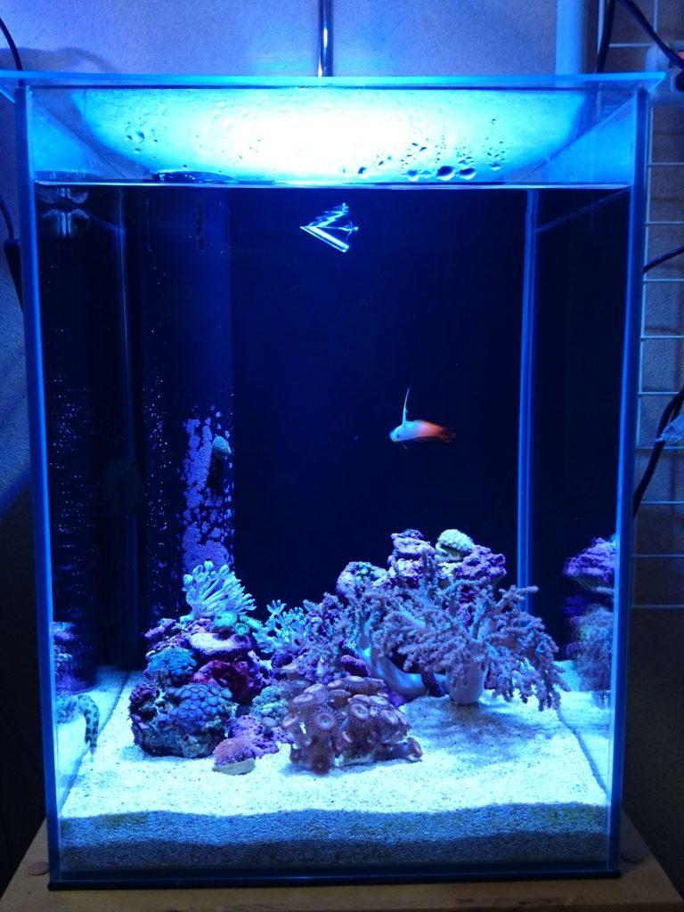 Grassy LeDio RX072 Reef(グラッシーレディオRX072リーフ) × 30cmキューブハイタイプ水槽