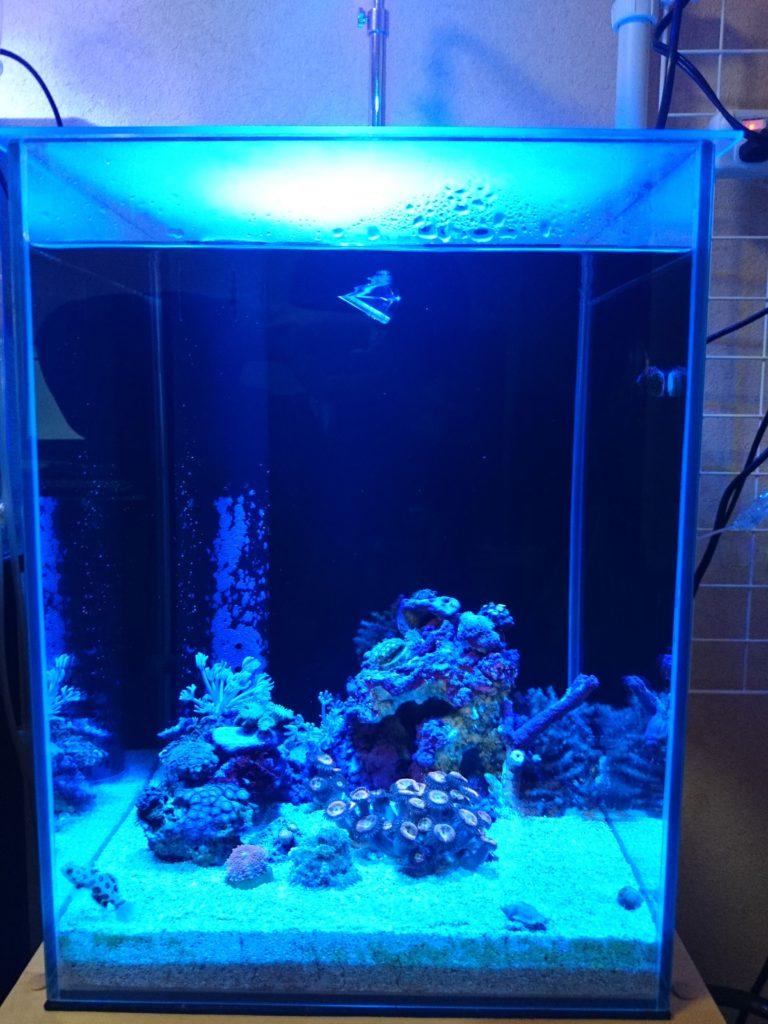 Lighting Master06 × 30cmキューブハイ水槽