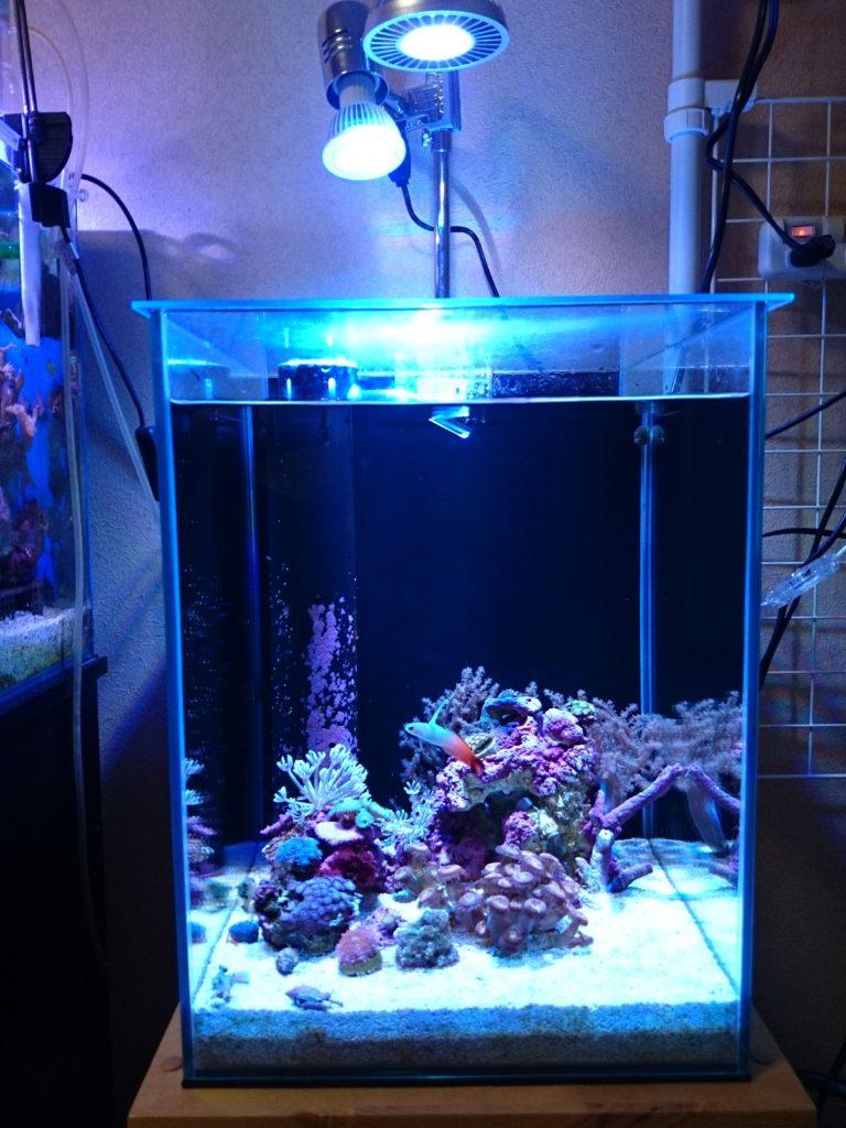 Grassy LeDio RX072 Reef×Lighting Master06 × 30cmキューブハイ水槽