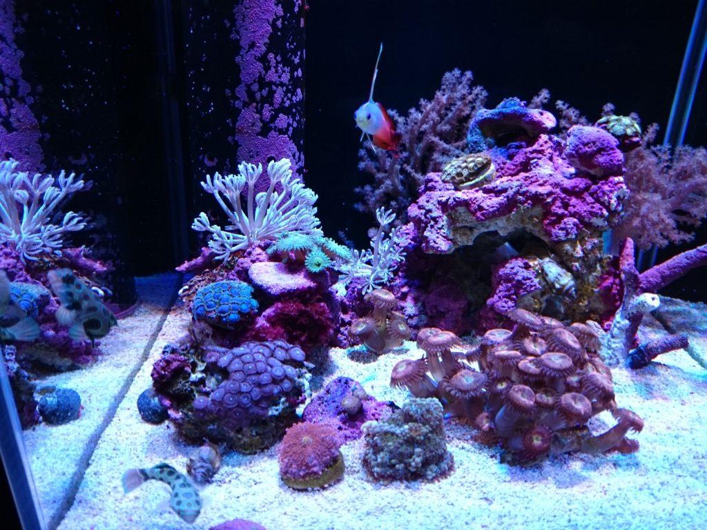 Grassy LeDio RX072 Reef(グラッシーレディオRX072リーフ)× Lighting Master06(ライティングマスター06)改カスタムカラーの色味