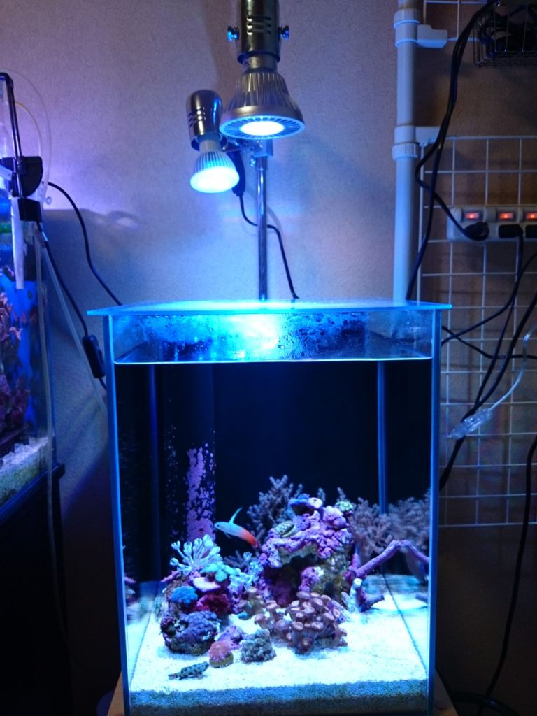 レディオアームとレディオクリップでGrassy LeDio RX072 Reef(グラッシーレディオRX072リーフ)と Lighting Master06(ライティングマスター06)改カスタムカラーを取り付け