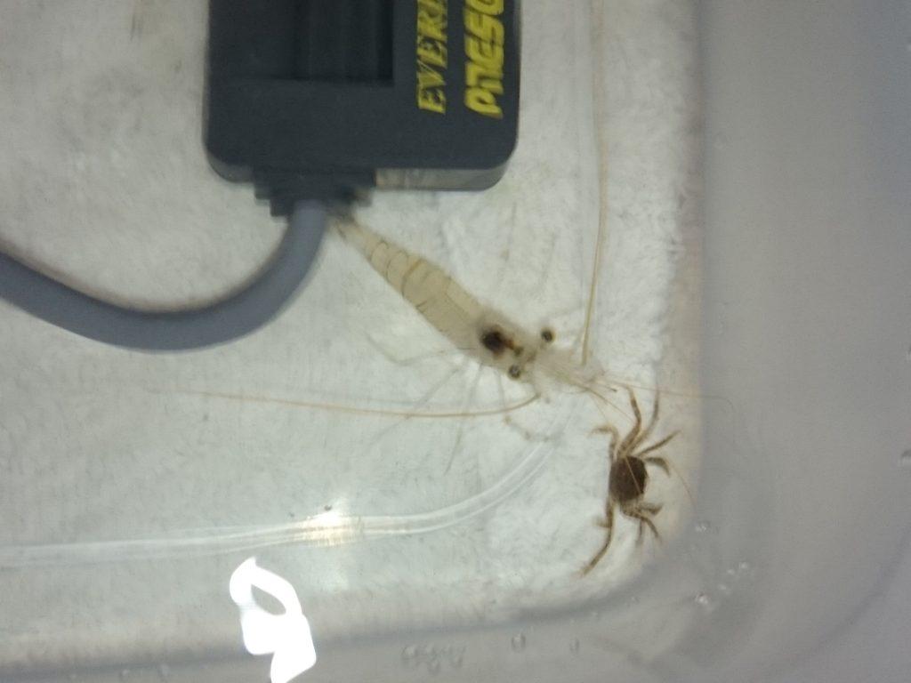 水槽リセットの為に生体を確保