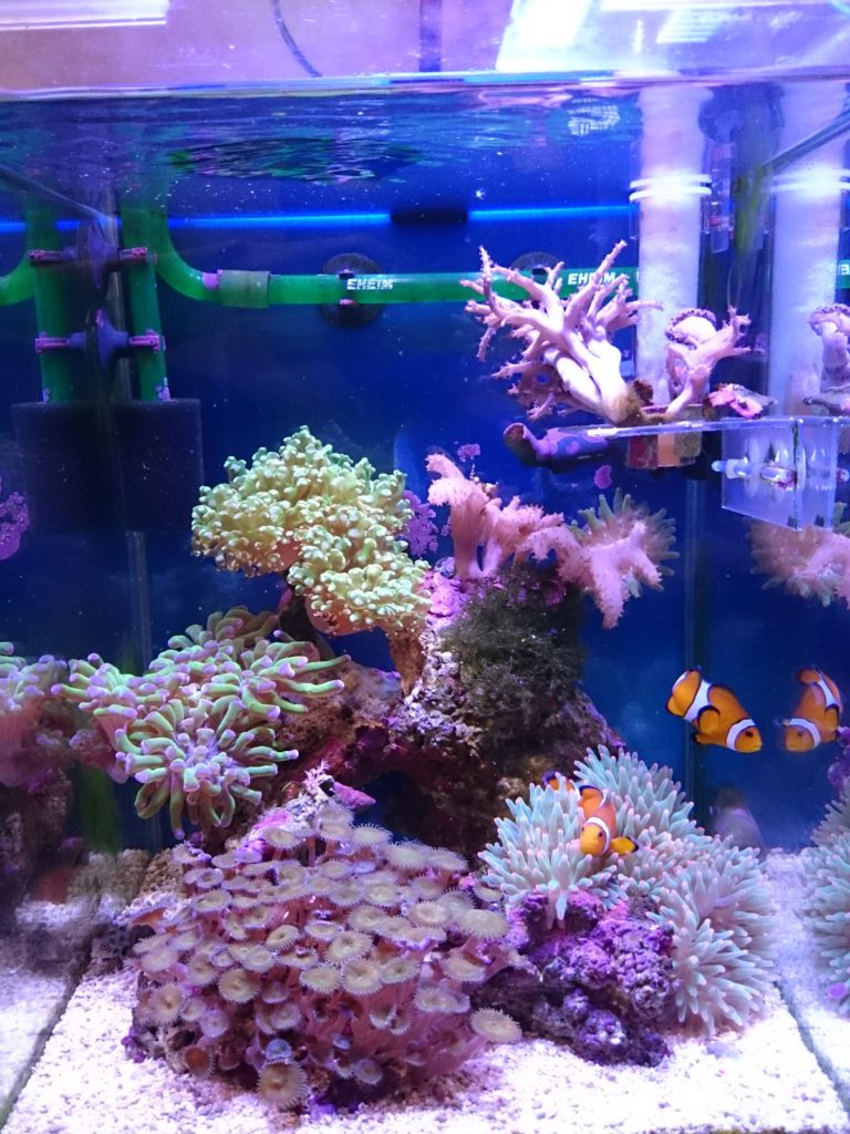 Marine LED light coral SPS LPS grow mini nano aquarium sea reef tank white blue purple hang on bend fix チャンネルA ブルー&ホワイト 全体像