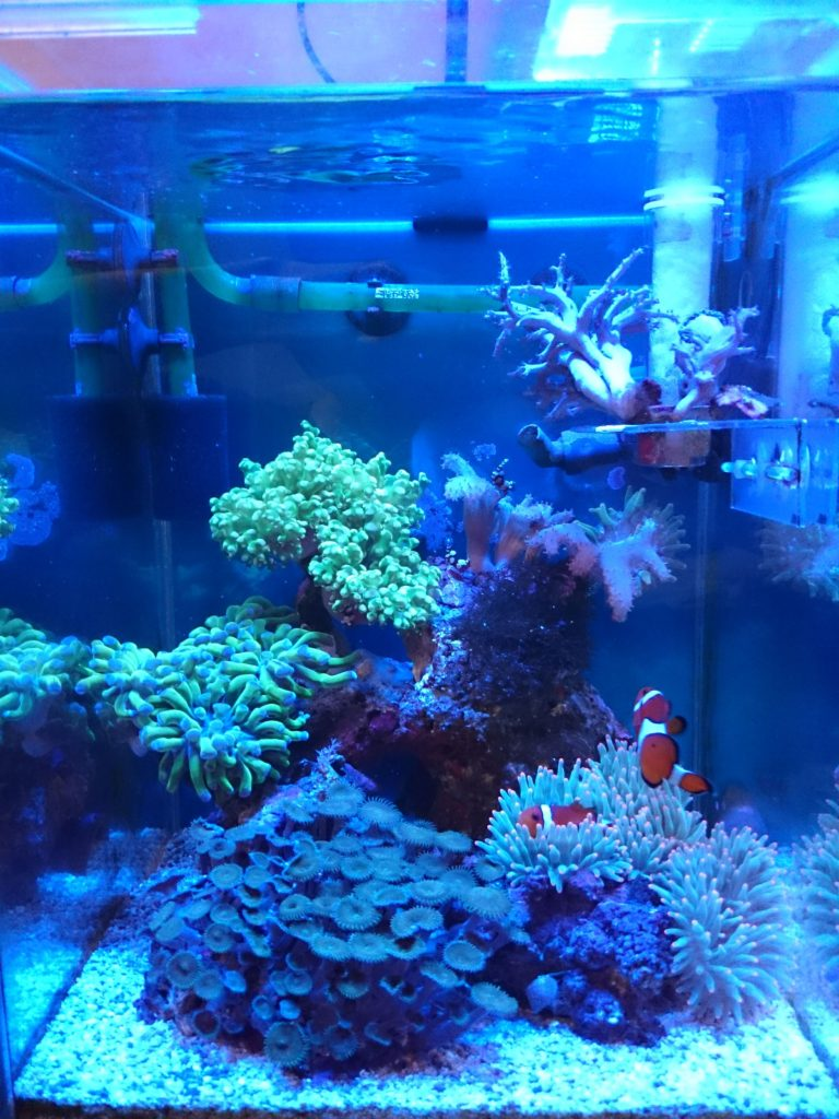 DSMarine LED light coral SPS LPS grow mini nano aquarium sea reef tank white blue purple hang on bend fix チャンネルB ブルー&パープル 全体像