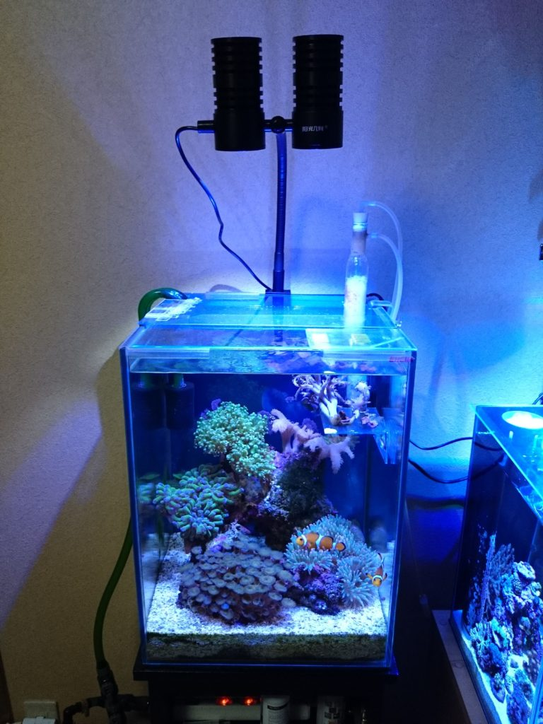 Marine LED light coral SPS LPS grow mini nano aquarium sea reef tank white blue purple hang on bend fix 設置3