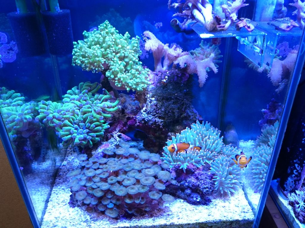 Marine LED light coral SPS LPS grow mini nano aquarium sea reef tank white blue purple hang on bend fix の使用感レビュー