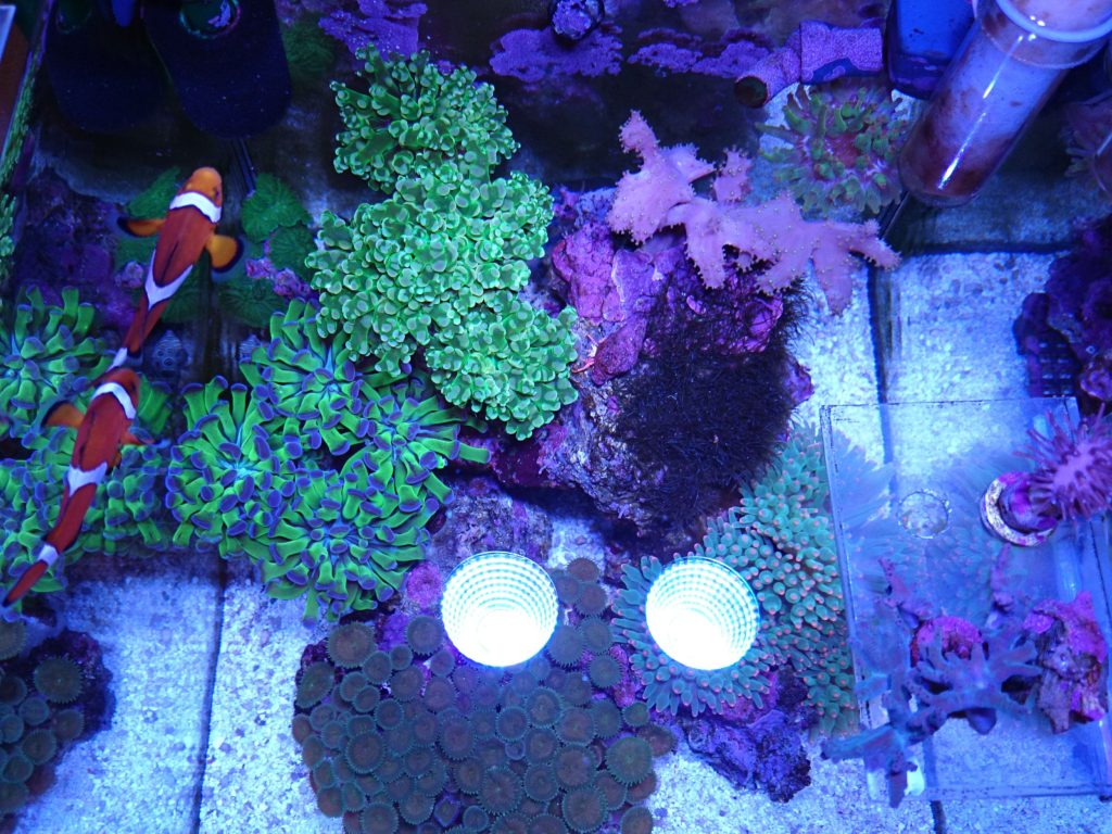 Marine LED light coral SPS LPS grow mini nano aquarium sea reef tank white blue purple hang on bend fix チャンネルA,B 同時点灯モード 真上からの全体像