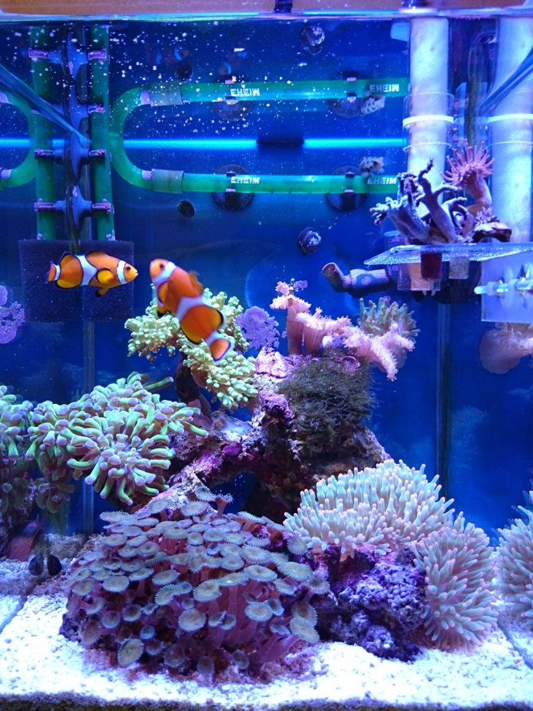 Marine LED light coral SPS LPS grow mini nano aquarium sea reef tank white blue purple hang on bend fix チャンネルA,B 同時点灯モード 全体像